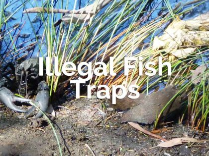 Illegal Fish Traps